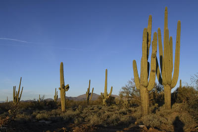 Tucson Residential Lots & Land For Sale: S Highway 79 #B