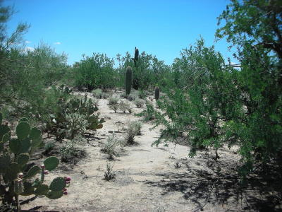 Residential Lots & Land Active Contingent: 10700 N Paisano Avenue