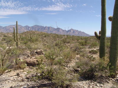 Tucson Residential Lots & Land For Sale: 14350 N Hawk Canyon Trail