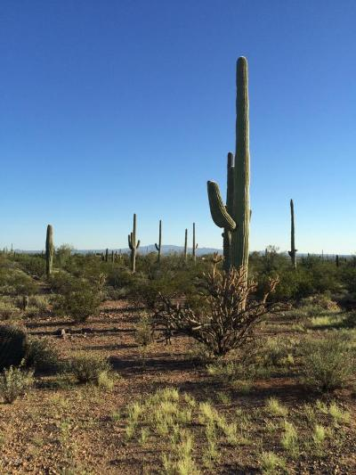 Tucson Residential Lots & Land For Sale: 11715 W Tortoise Trail