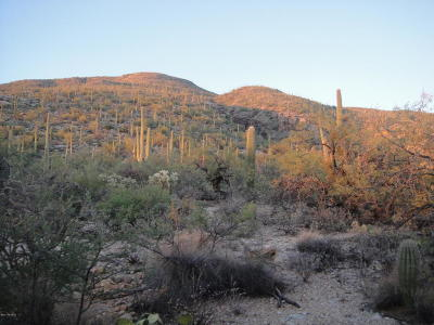 Tucson Residential Lots & Land For Sale: 10245 E Sabino Estates Drive #44&45