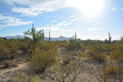 Residential Lots & Land For Sale: 10380 N Coyote Lane