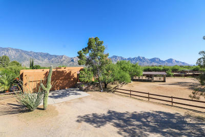 Tucson Single Family Home For Sale: 14750 N Bowman Road