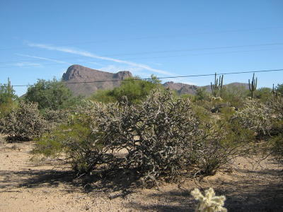 Residential Lots & Land For Sale: 7267 N Lydia Avenue