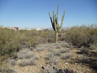 Residential Lots & Land For Sale: 6593 N Hay Trail