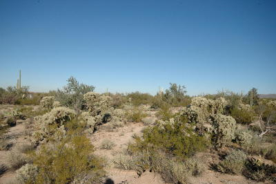 Residential Lots & Land For Sale: 10376-392 N Coyote [4 Acres] Lane