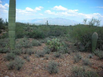 Tucson Residential Lots & Land For Sale: W Calle Paseo De Luz