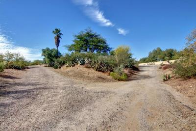 Tucson Single Family Home For Sale: 16061 N Sotol Avenue