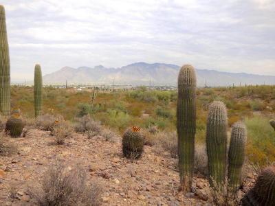Tucson Residential Lots & Land For Sale: 2842 N Broken Arrow Avenue #30