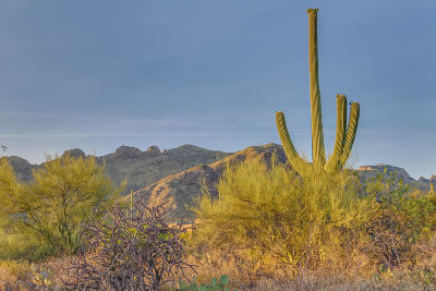 Tucson Residential Lots & Land For Sale: 7728 N Ancient Indian Drive #216