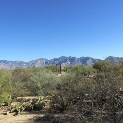Tucson Residential Lots & Land For Sale: 1700 W Limewood Drive