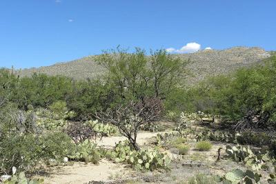 Tucson Residential Lots & Land For Sale: 5125 N Melpomene Way