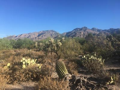 Tucson Residential Lots & Land For Sale: 5435 N Stonehouse Place #54
