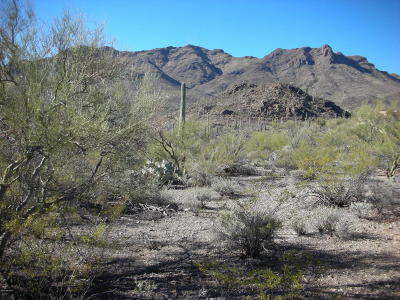 Tucson Residential Lots & Land For Sale: W Sweetwater Drive