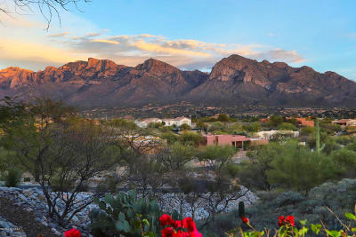 Oro Valley Single Family Home Active Contingent: 10985 N Poinsettia Drive