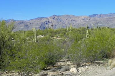 Tucson Residential Lots & Land For Sale: E Cape Horn Drive #13