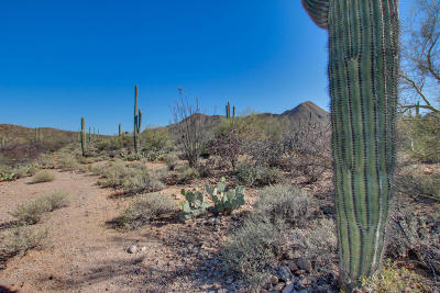 Tucson Residential Lots & Land For Sale: 1338 N Dusty Hollow Court