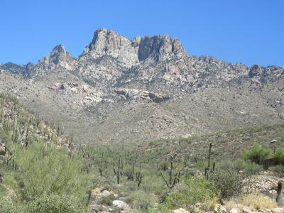 Tucson Residential Lots & Land For Sale: 2164 E Buck Ridge Place #Lot 59