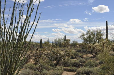Sahuarita Residential Lots & Land For Sale: 7255 W Bucking Horse Road