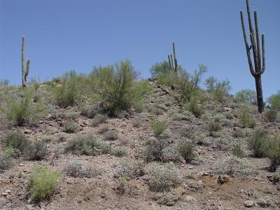 Tucson Residential Lots & Land For Sale: 6991 W El Camino Del Cerro