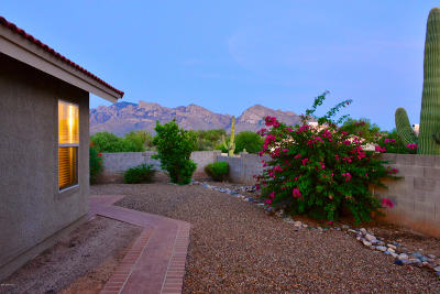 Tucson Single Family Home For Sale: 11441 N Copper Spring Trail