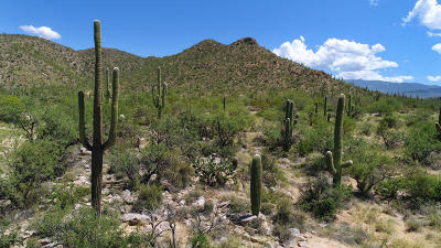 Tucson AZ Residential Lots & Land For Sale: $195,000