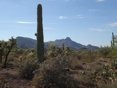 Tucson Residential Lots & Land For Sale: 6680 W Belmont Road