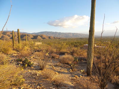 Tucson Residential Lots & Land For Sale: 5300 N Soldier Trail