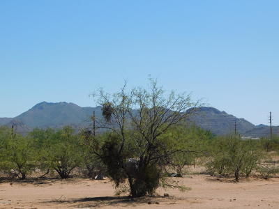 Tucson Single Family Home For Sale: 13502 W Manville Road