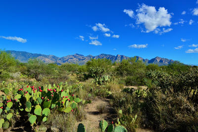 Oro Valley Residential Lots & Land For Sale: 14071 N Old Forest Trail #122