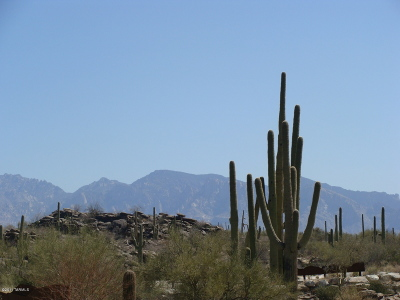 Pima County Residential Lots & Land For Sale: 13516 N Pointed Rock Court #264