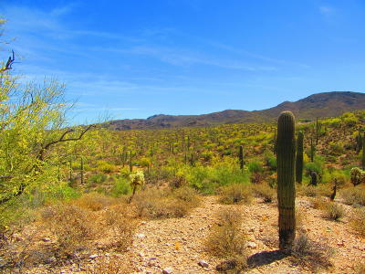 Residential Lots & Land For Sale: Sunset Hills #10AC