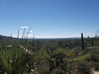 Tucson Residential Lots & Land For Sale: 12000BLK E Cabeza De Vaca #10