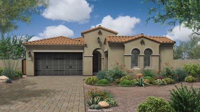 Tucson Single Family Home For Sale: 13183 N Rainbow Cactus Court