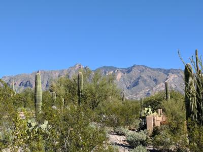 Tucson Residential Lots & Land For Sale: 5320 N Camino Escuela #89