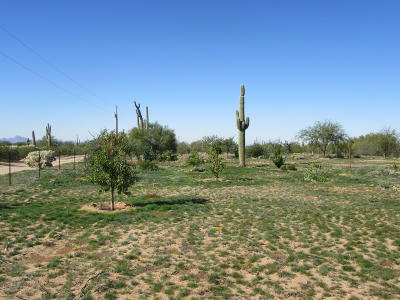 Residential Lots & Land For Sale: XX E Staghorn Lane #2.5 ac