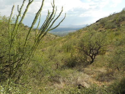 Rio Rico Residential Lots & Land For Sale: 381 Camino Canoa #15