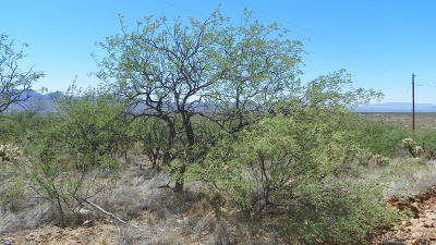 Rio Rico Residential Lots & Land For Sale: 1764 Pliego Court #34