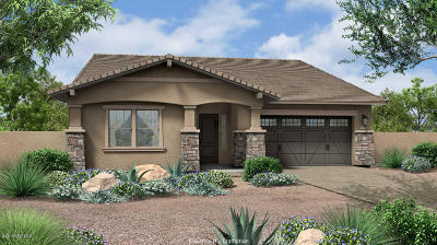 Tucson Single Family Home For Sale: 13205 N Rainbow Cactus Court