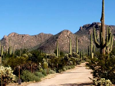 Tucson Residential Lots & Land For Sale: 12200BLK W Ft. Lowell Road