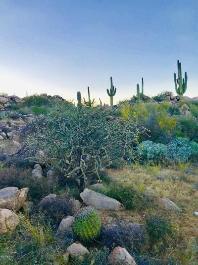 Tucson Residential Lots & Land For Sale: 623 W Granite Gorge Drive W #333