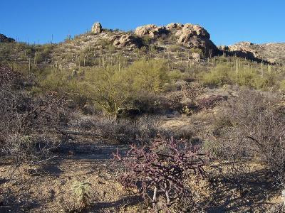 Tucson Residential Lots & Land For Sale: 13945 E Redington Road