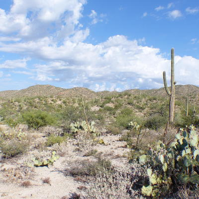 Residential Lots & Land For Sale: 14260 N Hawk Canyon Trail
