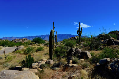 Oro Valley Residential Lots & Land For Sale: 709 W Granite Gorge Drive W #331