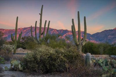 Tucson Residential Lots & Land For Sale: 14077 N Flint Peak Place #599