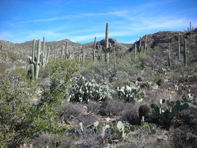 Tucson Residential Lots & Land For Sale: 4000 N Caliente Canyon Place