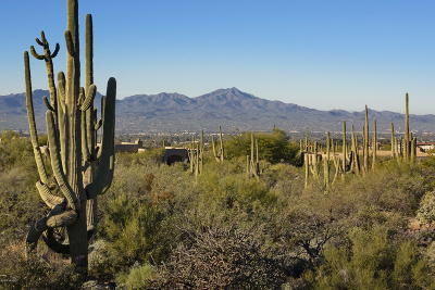 Tucson Residential Lots & Land For Sale: 7788 N Ancient Indian Drive #211