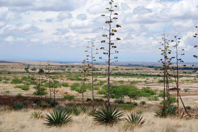 Willcox Residential Lots & Land For Sale: Pinery Canyon Road