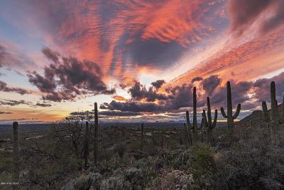 Tucson Residential Lots & Land For Sale: 13661 E Sahuaro Sunset Road #16