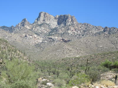 Pima County Residential Lots & Land For Sale: 2164 E Buck Ridge Place #Lot 59